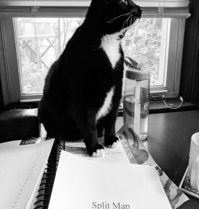 A B&W photo of a tuxedo cat sitting on papers
